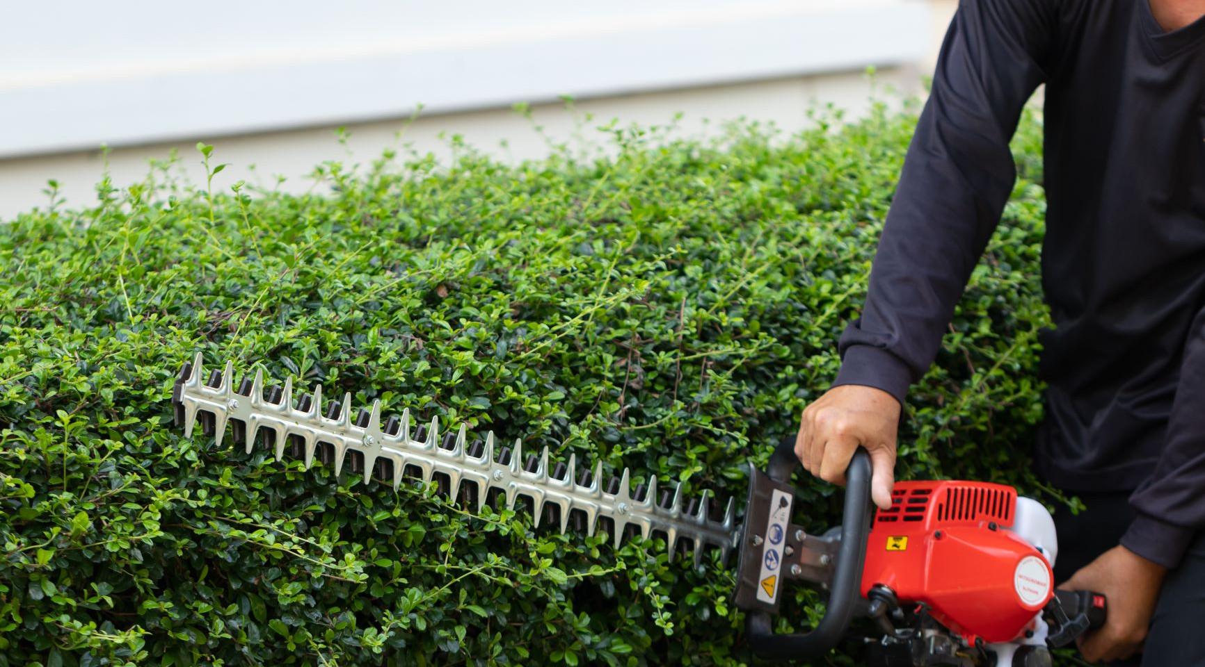 Shrub and Tree Pruning