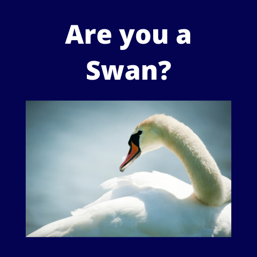 Get your swan costume ready!*