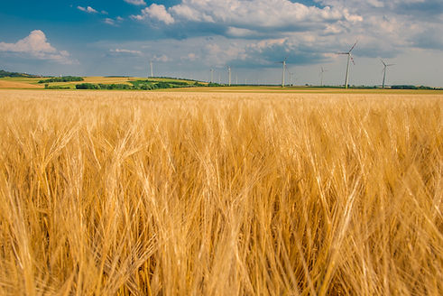rye-field-and-power-plant-PAEV3UD.jpg
