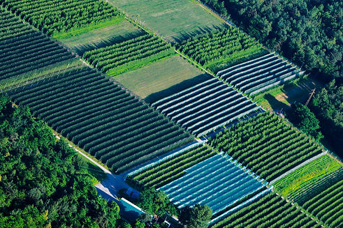 large-cultivation-greenhouse-seen-PZGF7V