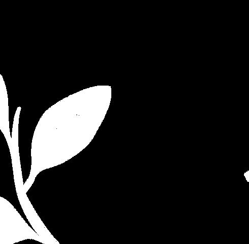 spezia-background-branco_edited_edited.p