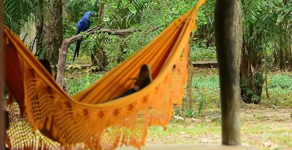 Rede Carla Aymara Lodge arara azul.png