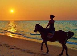mozambique horse riding benguerra