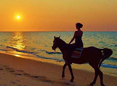 mozambique horse riding benguerra.JPG