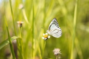 Springing forward into change. white butterfly on a flower