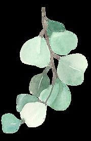 eucalyptus3_edited.png