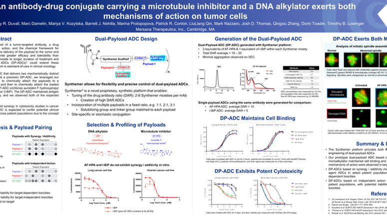 An antibody-drug conjugate carrying a microtubule inhibitor and a DNA alkylator exterts both mechani
