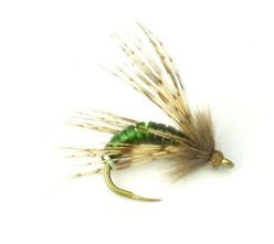 Graphic Caddis.JPG