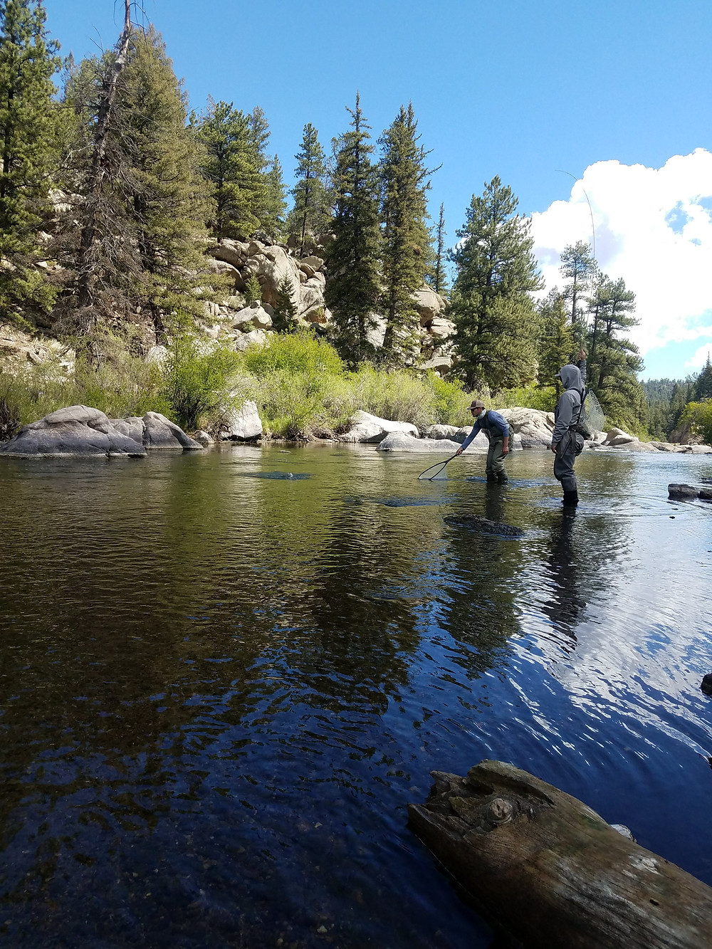 Eleven Mile Canyon Colorado fly fishing