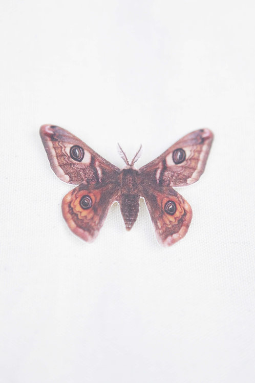 Large Atlas Moth Pin