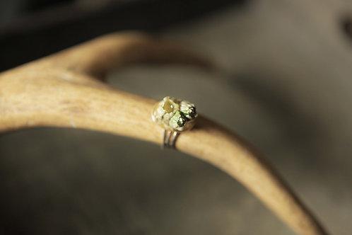 Real Barnacle Ring
