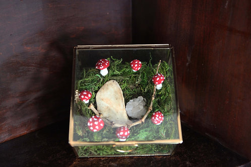 Glass Display Box with Fairy Ring, Bones & a Crystal