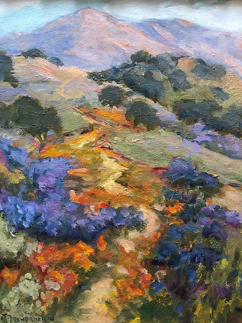 Figueroa Mountain By Ellie Freudenstein