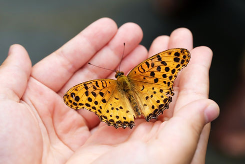 butterfly dans une main.jpg