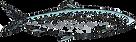 herring-fish-vector-sketch-illustration-