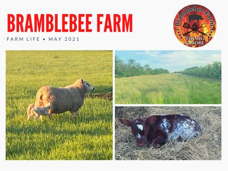 Farm Life - May 2021