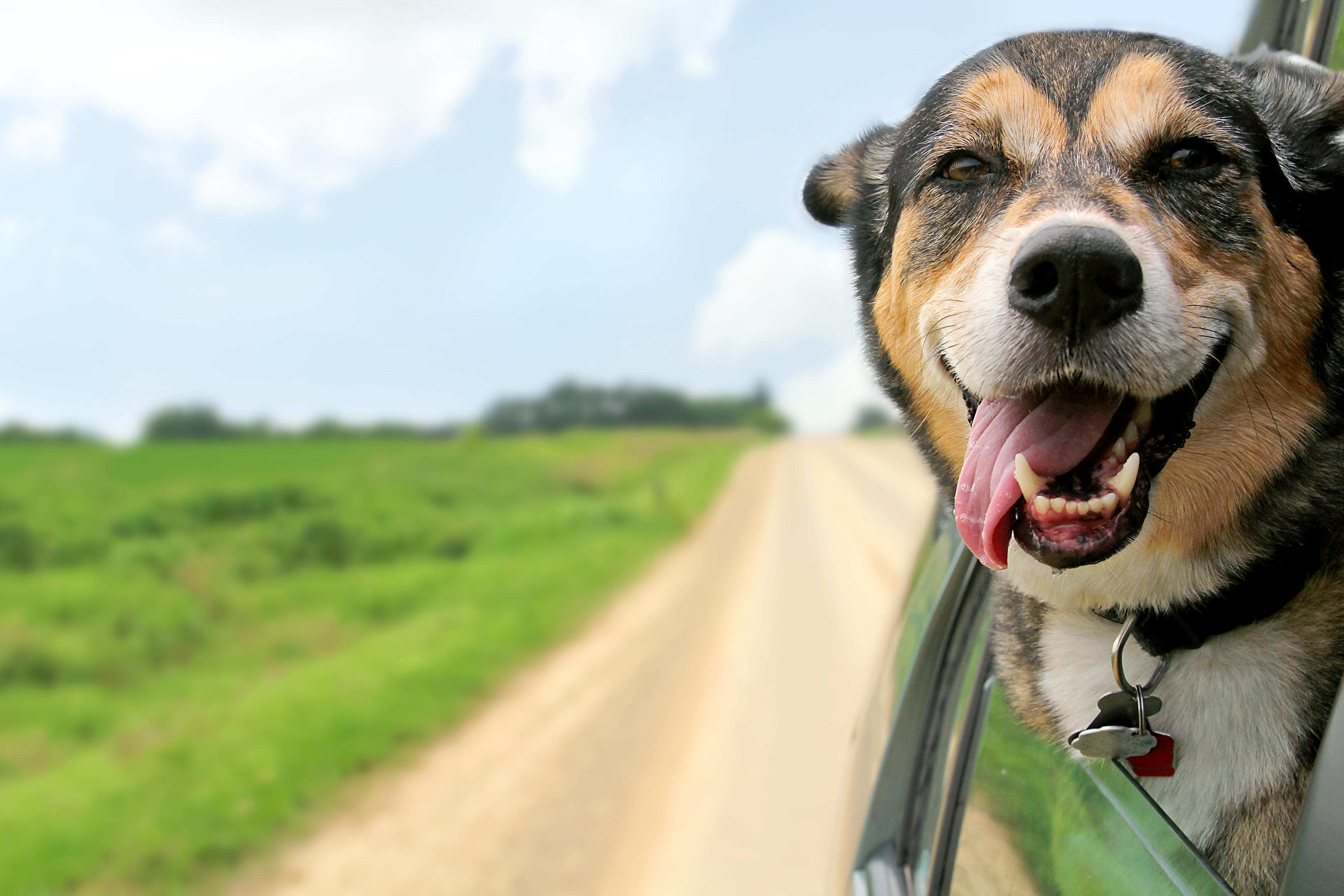 #healthytreatsforahealthydog