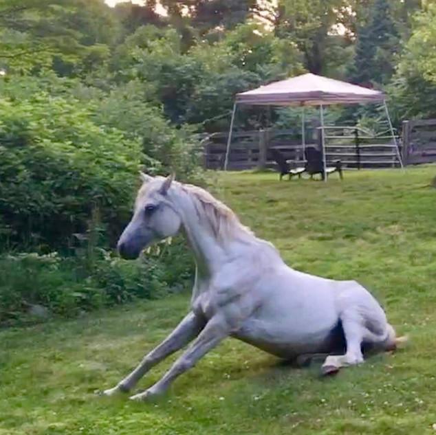 YogaInWaves horse yoga