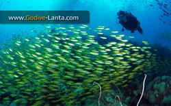 trip-diving-koh-bida17.jpg