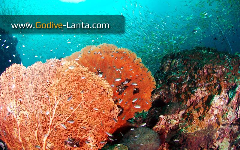 trip-diving-koh-bida22.jpg
