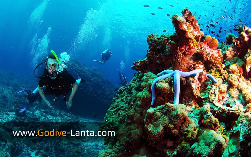 trip-diving-koh-pp04.jpg