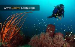 trip-diving-koh-pp09.jpg