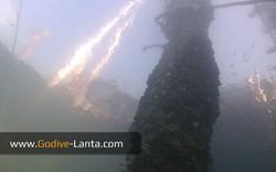 trip-diving-jetty06.jpg