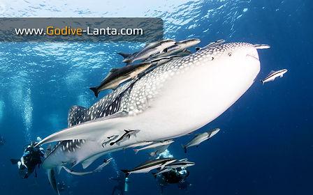 Diving Trip - Koh Lanta, Krabi, THAILAND