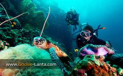 trip-diving-koh-pp01.jpg