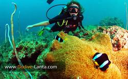 trip-diving-koh-pp08.jpg