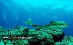 trip-diving-koh-bida10.jpg