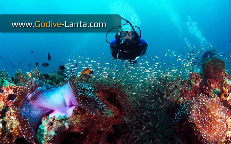 trip-diving-koh-bida18.jpg
