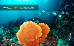 trip-diving-koh-bida21.jpg