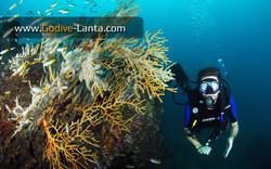 trip-diving-koh-pp11.jpg