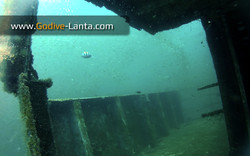 trip-diving-klet-kaew-ship-wreck6.jpg