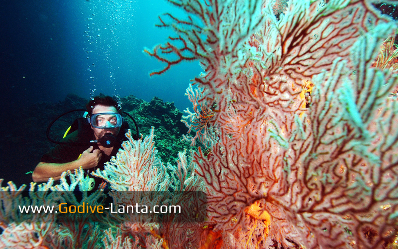 trip-diving-koh-bida13.jpg