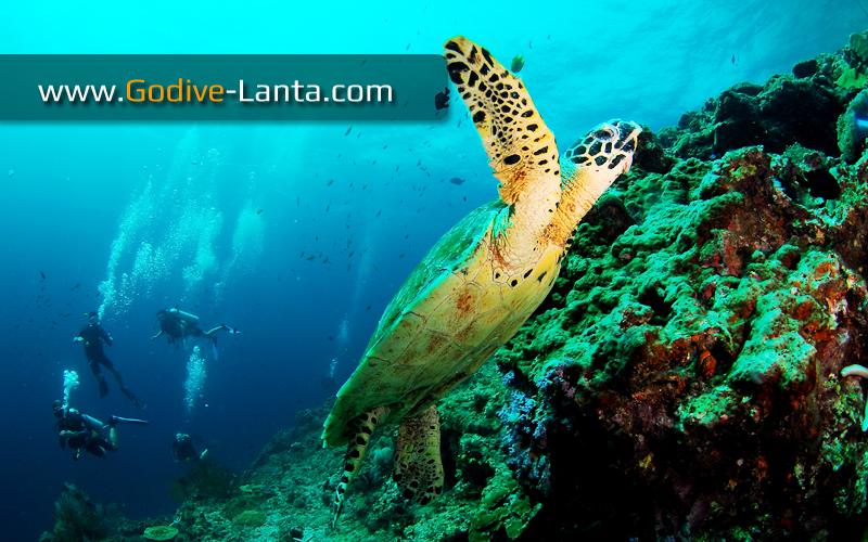 trip-diving-koh-pp12.jpg