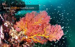 trip-diving-koh-pp15.jpg