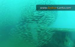 trip-diving-klet-kaew-ship-wreck3.jpg