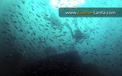trip-diving-klet-kaew-ship-wreck4.jpg