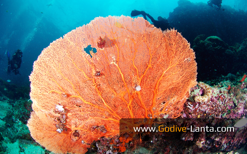 trip-diving-koh-bida24.jpg