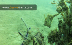 trip-diving-jetty13.jpg