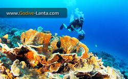 trip-diving-koh-bida14.jpg