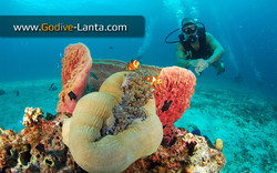 Diving with tropical fish and coral.