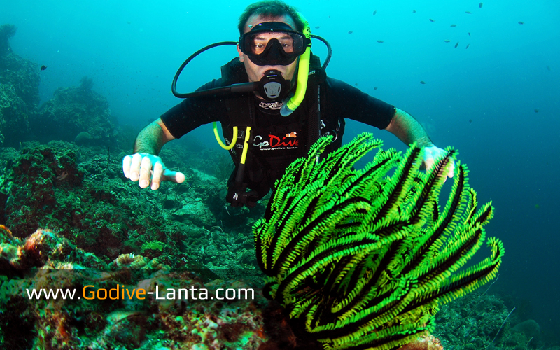 trip-diving-koh-bida07.jpg