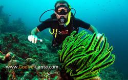 trip-diving-koh-bida07.jpg