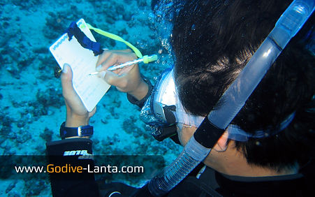Deep Diver Course Learning
