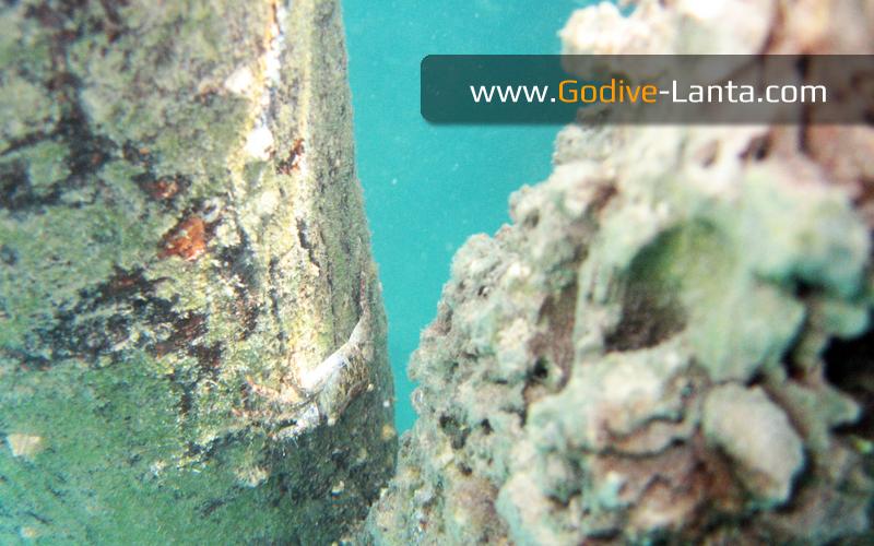 trip-diving-jetty02.jpg