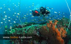 trip-diving-koh-pp13.jpg
