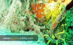 trip-diving-koh-mook14.jpg
